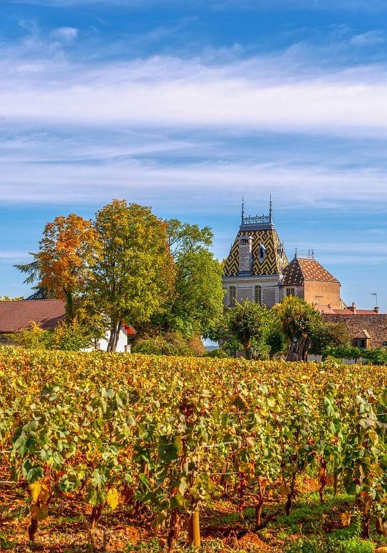 Vignobles, Château de Corton André