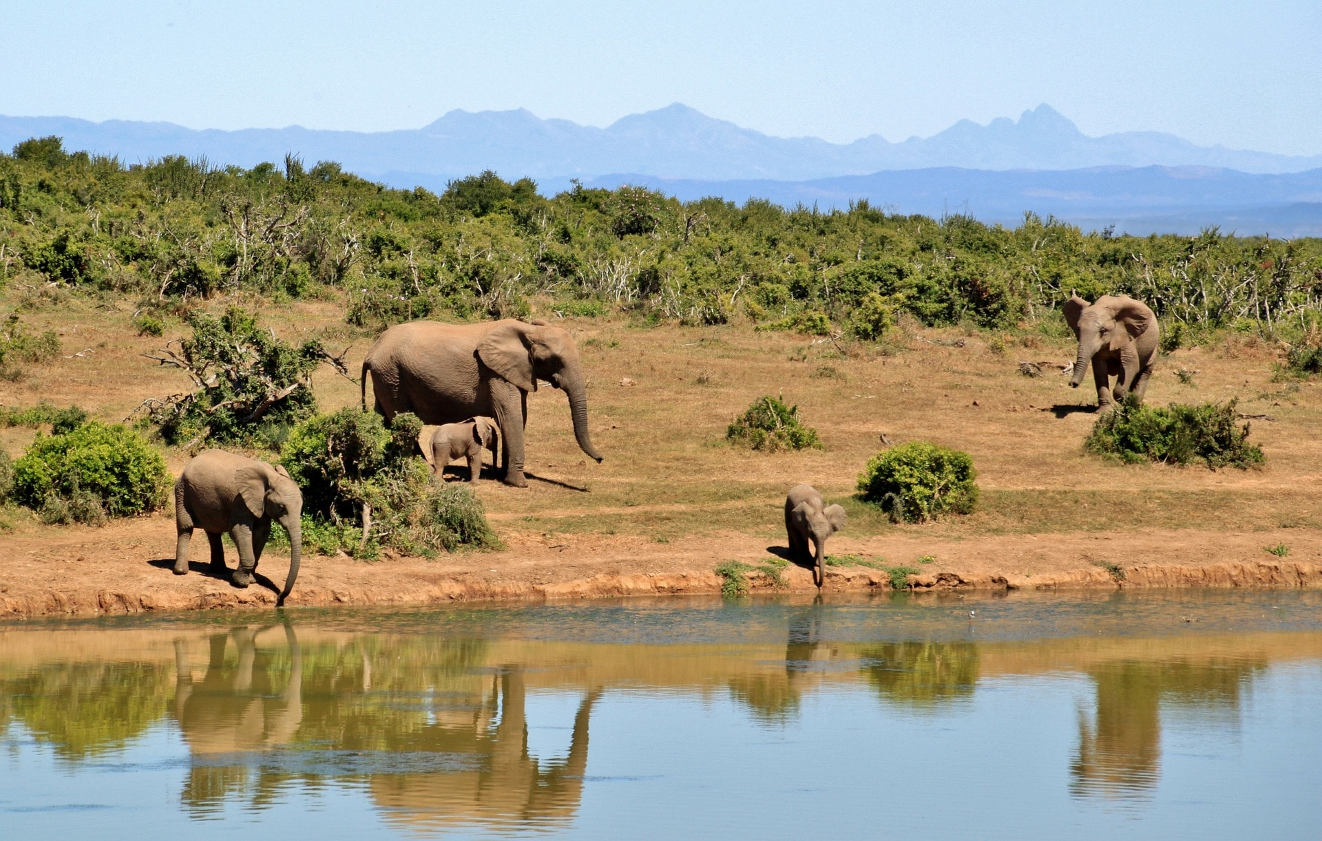 Carrousel central - elephant-427138_1920