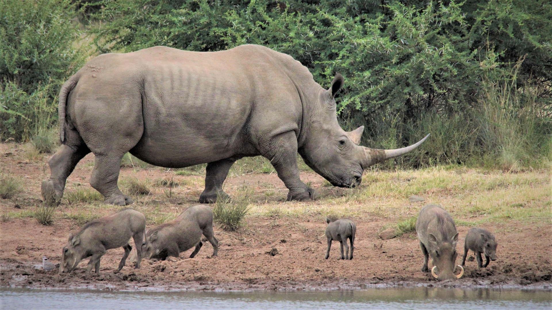 Carrousel - white-rhino-5107981_1920