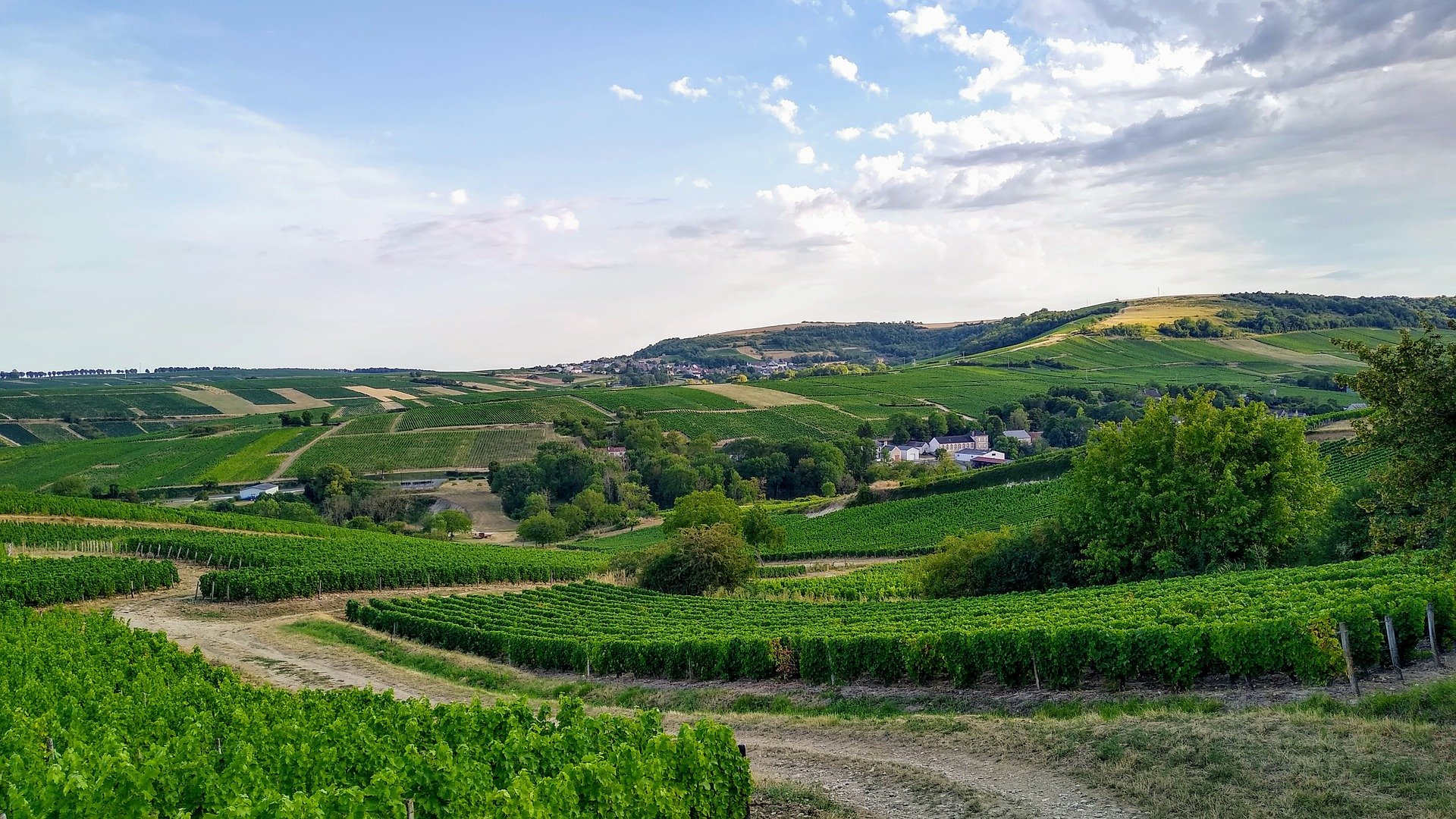 vineyards-5480243_1920