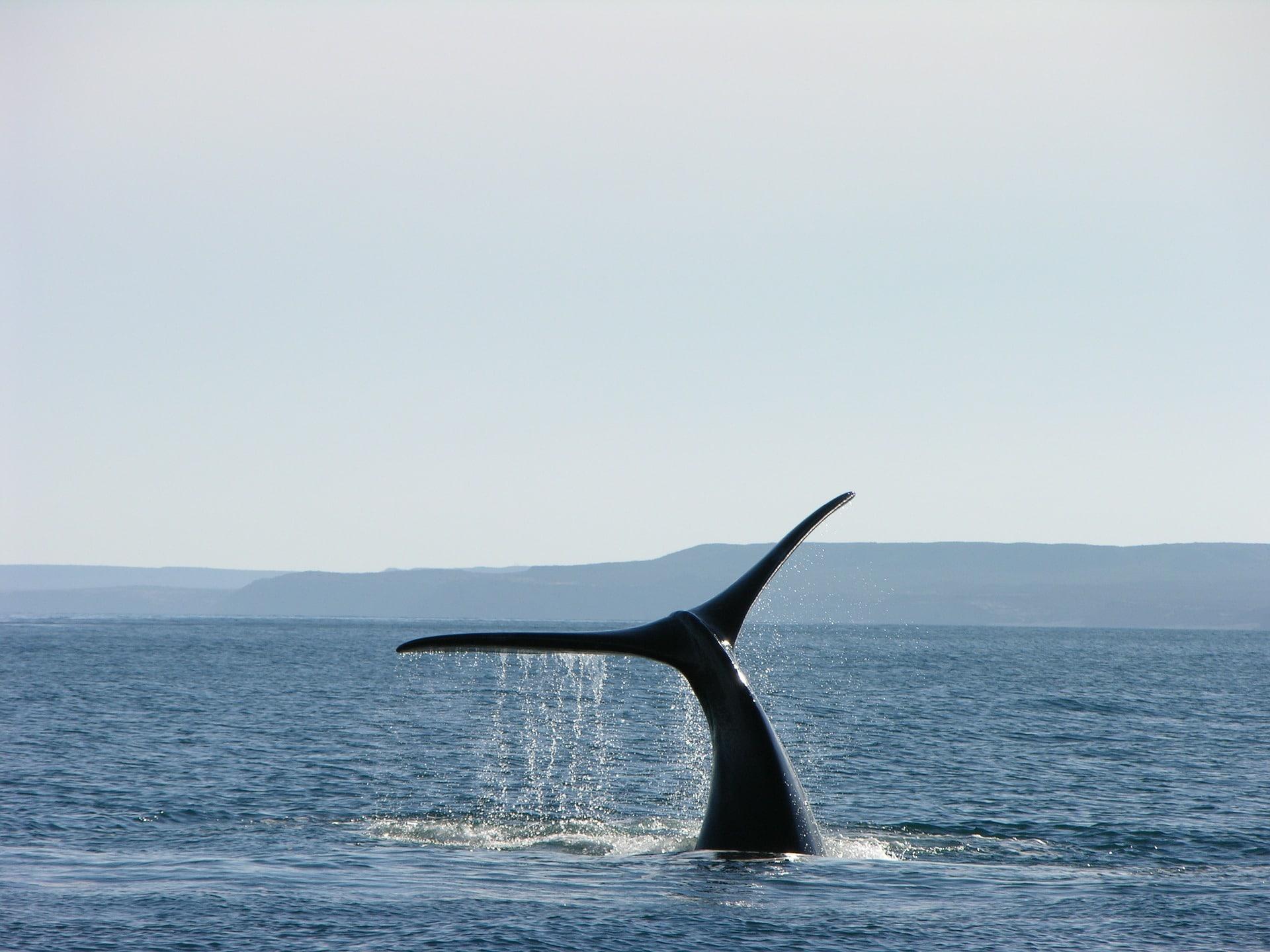 whale-1181395_1920