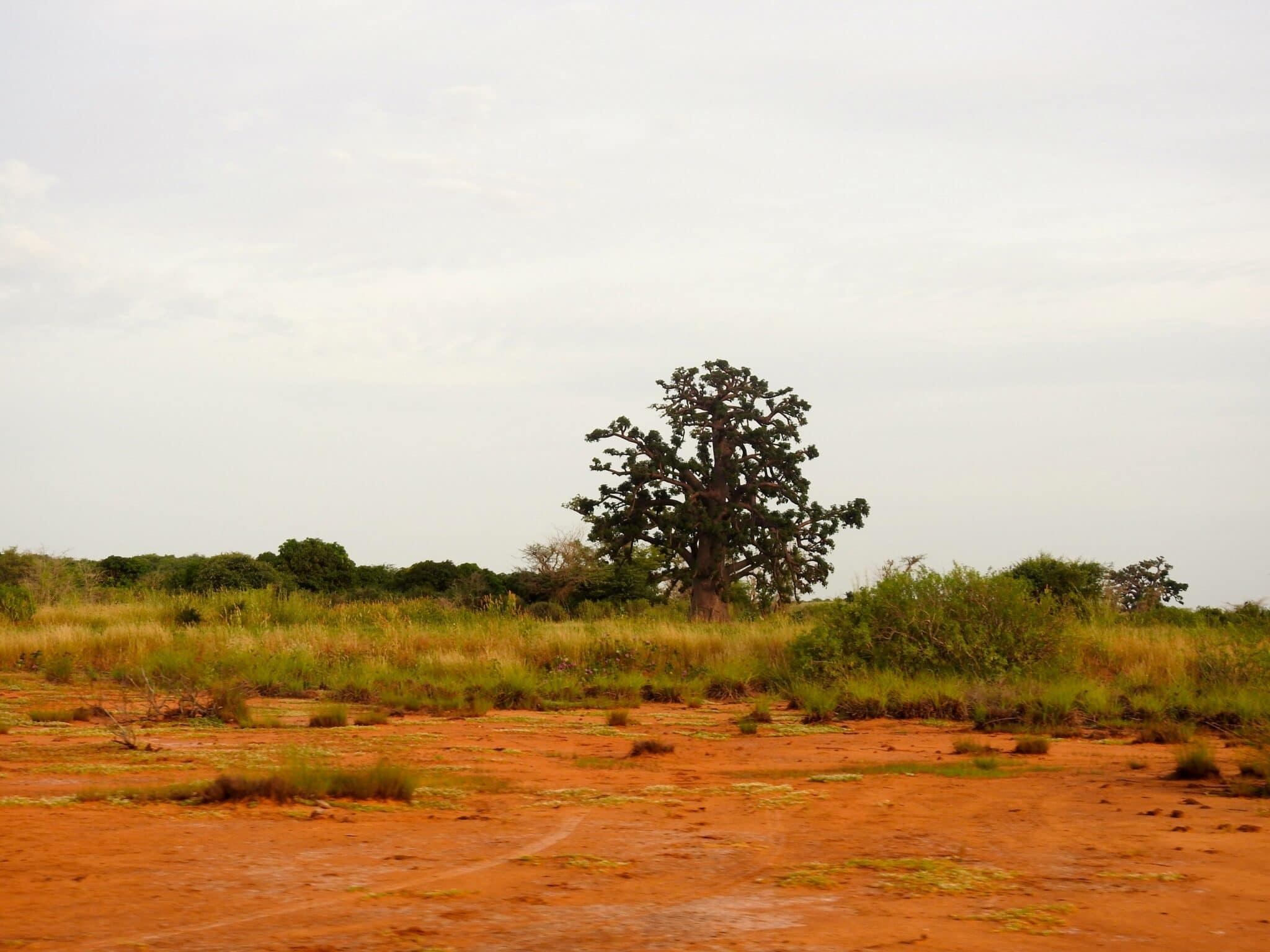photo 24 Somone paysage